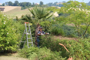 Tuinman Luigi houdt de tuin bij | Vakantiewoning Casa Cipresse