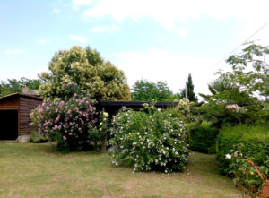 Garage en bloeiende struiken | Vakantiewoning Casa Cipresse