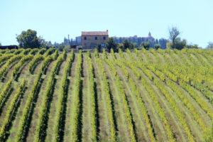 Wijngaarden | Vakantiewoning Casa Cipresse