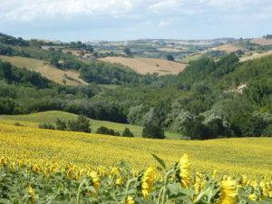 Landschap rond Montottone | Vakantiewoning Casa Cipresse