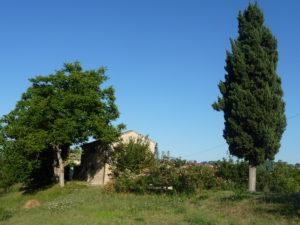 De grote cipres | Vakantiewoning Casa Cipresse