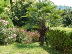 Twee palmbomen sieren de tuin | Vakantiewoning Casa Cipresse